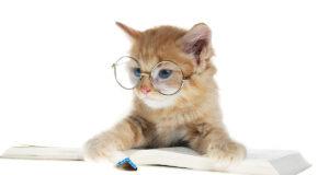 Кошки (фото)