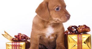 Собаки (фото)
